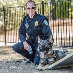 Blitz was an unusually fast learner and had an innate understanding of what was expected of him during his training, making him a good candidate for police work. 