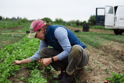Fresh off the farm to your fork for Soil born farms