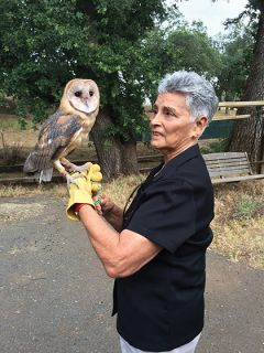 Member Mary Corral holds barn owl, Ms. Whisper.  Whisper was found as a very young owl in April 2017 with head trauma after falling out of a very tall palm tree. Photo courtesy Kelli Moulden