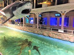 Key West Aquarium is home to 100 species of marine life. Photo by David Dickstein