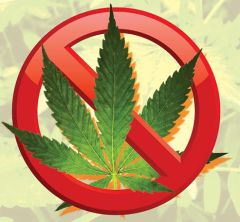 Because marijuana remains categorized as a controlled substance under federal law, the state has left it up to individual counties and cities to determine if they wanted in on the action or not, giving them a Dec. 31 deadline. MPG copyright image.