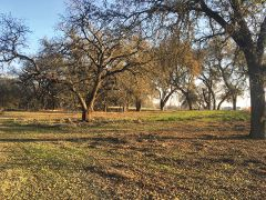 The future park land is studded with beautiful native oak trees that will be preserved as a nature area. Photo by Ralph Carhart.