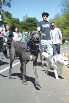 The Doggy Dash has grown to include more than 5,000 attendees and is Northern California's largest 2K/5K dog walk and pet festival, with a goal to raise $180,000. Photos provided by SSPCA